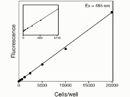 The linear range of the assay with incubation at 37°C for 30 minutes is from 100 to 20,000 CHO cells per well in a 96-well format. The inset shows that linearity can be obtained even with very low numbers of cells. Fluorescence measurements were made using a microplate reader with excitation at 485 nm and emission detection at 530 nm. The plotted data points represent averages of quadruplicate samples without background subtraction.