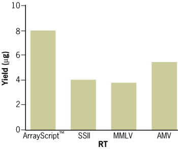 A comparison of ArrayScript™ (200 U), SuperScript® II (200 U), wild type MMLV-RT (200 U), and wild type AMV-RT (10 U) in MessageAMP™ II conditions demonstrate that ArrayScript™ outperforms other commercial RT's. 90 ng HeLa-S3 total RNA (28S/18S ratio = 1.7) was heat denatured in the presence of T7 Oligo (dT) at 70°C for 10 min. Reverse transcription was initiated with the RT enzyme and incubated at 42°C for 2 hr in an air incubator. The final aRNA yield was quantified by absorbance at 260 nm using a NanoDrop® spectrophotometer.