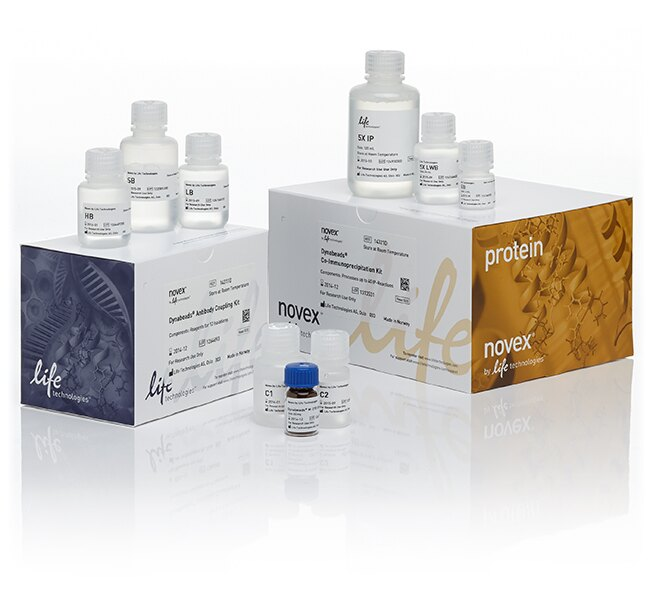 Dynabeads® Co-Immunoprecipitation Kit