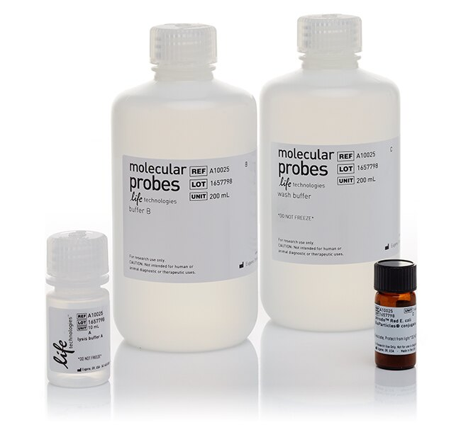 pHrodo&reg; Red <i>E. coli</i> BioParticles&reg; Phagocytosis Kit for Flow Cytometry