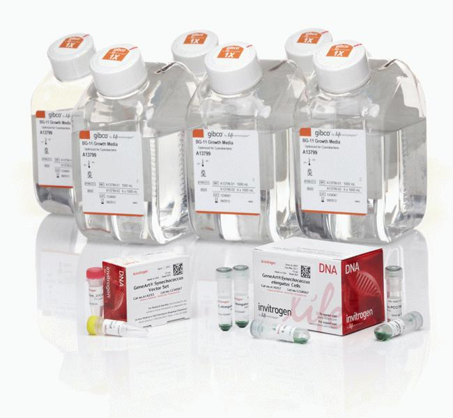 GeneArt&reg; <i>Synechococcus</i> Engineering Kit, with 6 L media