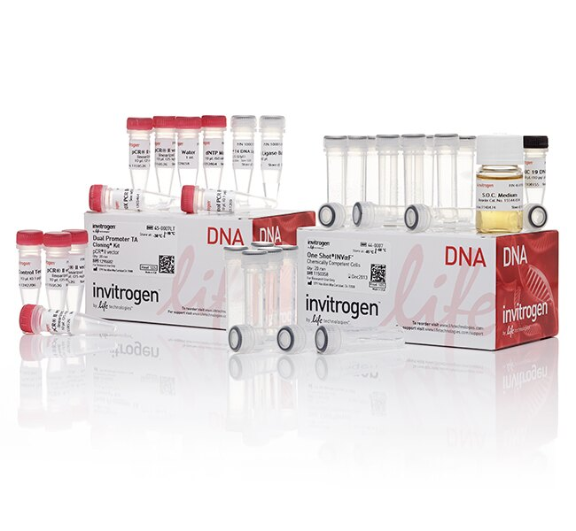 TA Cloning&reg; Kit, Dual Promoter, with pCR&trade;II Vector and One Shot&reg; INV&alpha;F' Chemically Competent <i>E. coli</i>