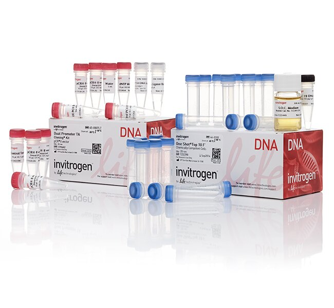TA Cloning&reg; Kit, Dual Promoter, with pCR&trade;II Vector and One Shot&reg; TOP10F' Chemically Competent <i>E. coli</i>
