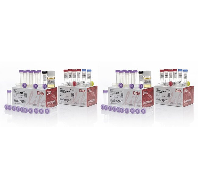 TOPO&reg; TA Cloning&reg; Kit, Dual Promoter, with One Shot&reg; TOP10 chemically competent <i>E. coli</i> cells
