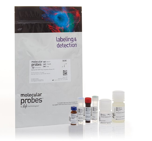 Vybrant® FAM Poly Caspases Assay Kit, for flow cytometry