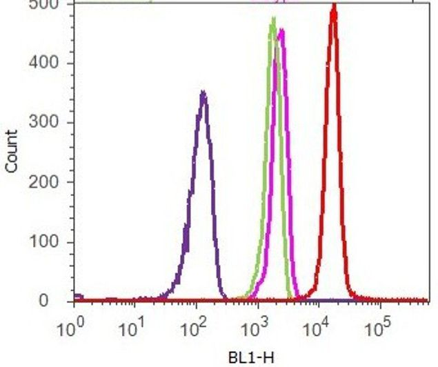 beta Catenin Antibody (13-8400) in Flow Cytometry