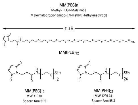 Peg Maleimide Cysteine of Methyl-peg-maleimide