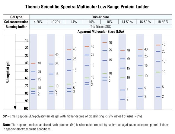 Spectra Multicolor Low Range Protein Ladder Life