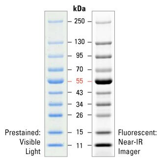 PageRuler Prestained NIR Protein Ladder - Thermo Fisher Scientific