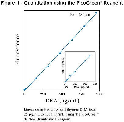 Picogreen analysis essay