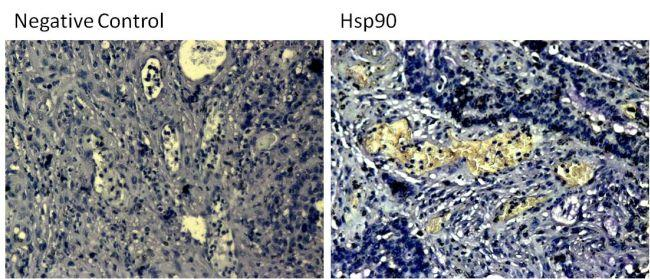 Mouse IgG (H+L) Secondary Antibody (31431) in Immunohistochemistry (Paraffin)