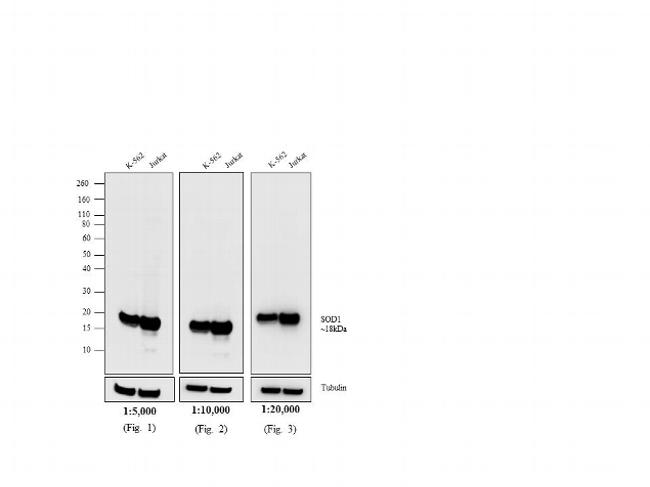 Mouse IgG (H+L) Secondary Antibody (31800)