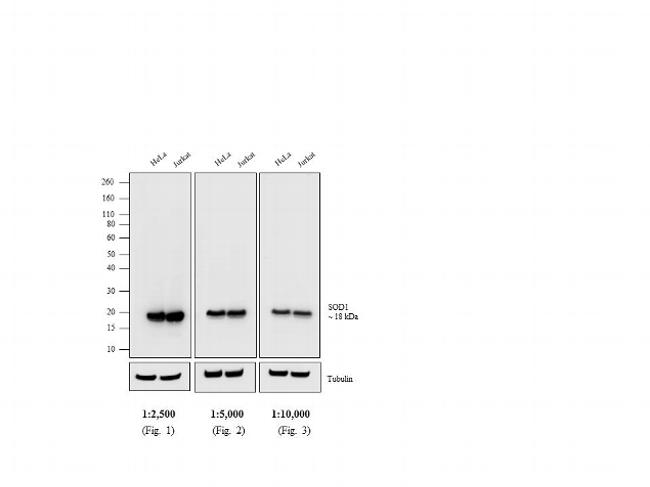 Mouse IgG (H+L) Poly-HRP Secondary Antibody (32230)