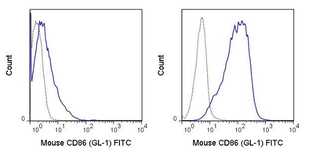 CD86 Antibody (A27077)
