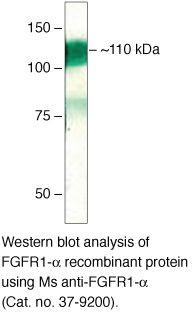 FGFR1 Antibody (37-9200)
