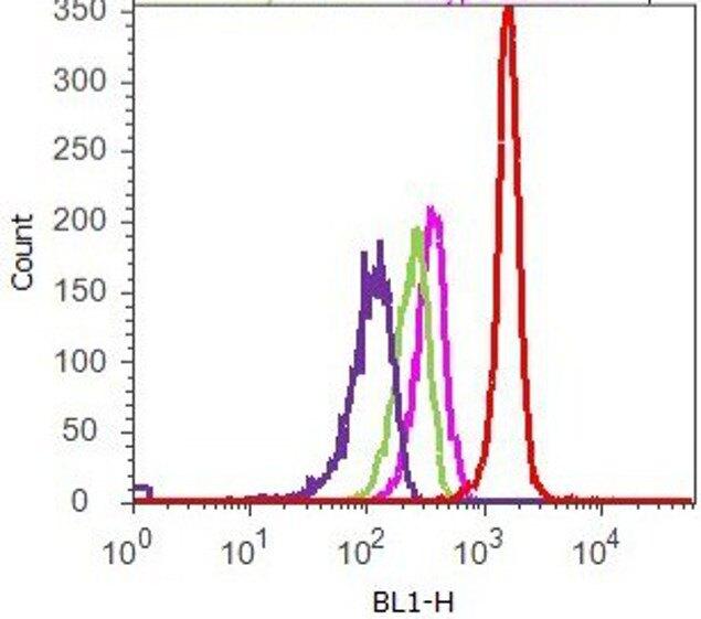 FAK Antibody (39-6500) in Flow Cytometry