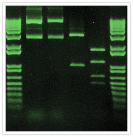 research papers on agarose gel electrophoresis