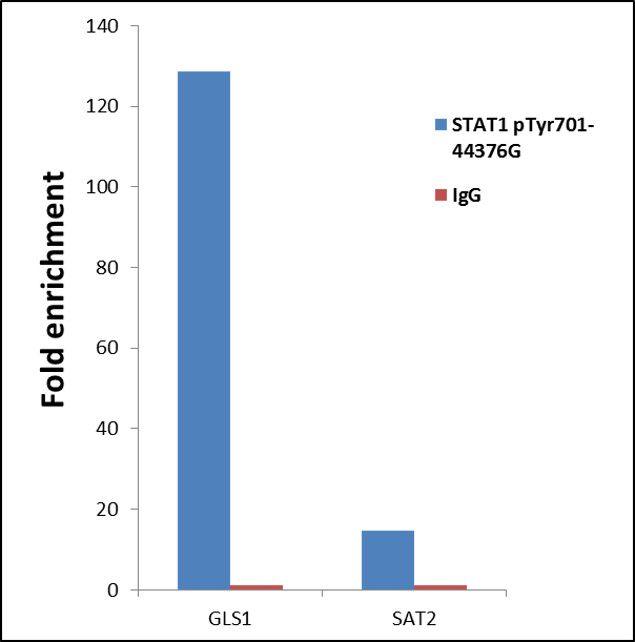 Phospho-STAT1 (Tyr701) Antibody (44-376G) in ChIP assay