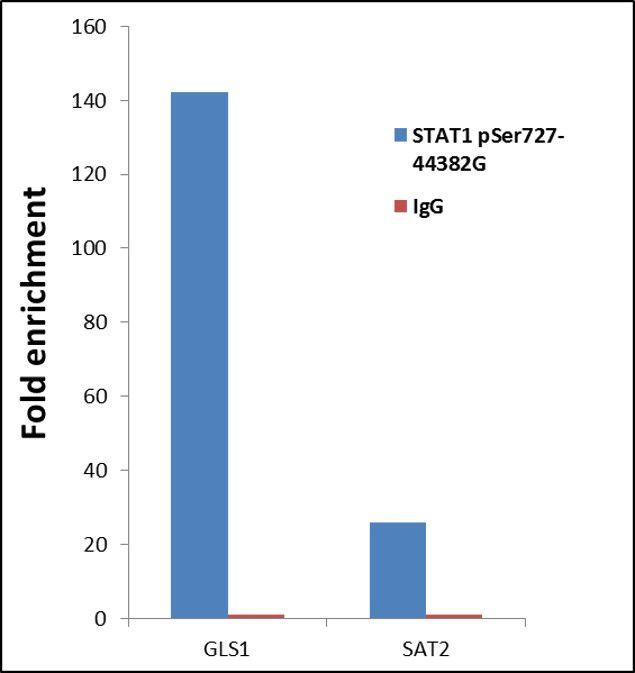 Phospho-STAT1 (Ser727) Antibody (44-382G) in ChIP assay