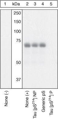 Phospho-Tau (Ser214) Antibody (44-742G) in Western Blot