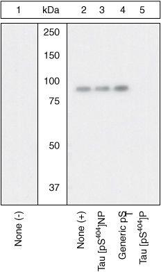 Phospho-Tau (Ser404) Antibody (44-758G) in Western Blot