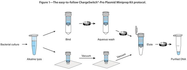 ChargeSwitch-Pro Plasmid Miniprep Kit - Thermo Fisher ...