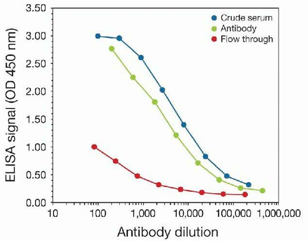 Di-Methyl-Histone H3 (Lys27) Antibody (49-1013) in peptide-ELISA