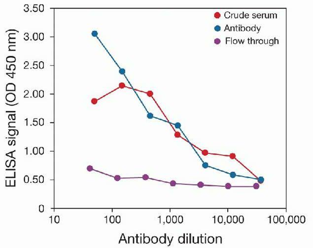Methyl-Histone H3 (Lys36) Antibody (49-1016) in peptide-ELISA
