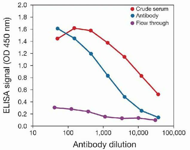 Tri-Methyl-Histone H3 (Lys36) Antibody (49-1017) in peptide-ELISA