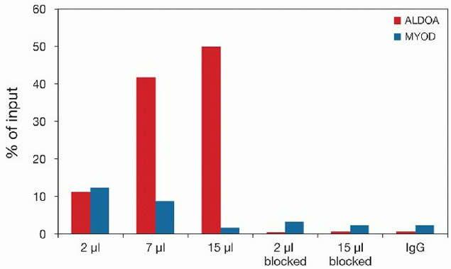 Di-Methyl-Histone H3 (Lys79) Antibody (49-1019) in ChIP assay