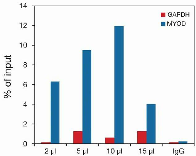 Methyl-Histone H4 (Lys20) Antibody (49-1023) in ChIP assay