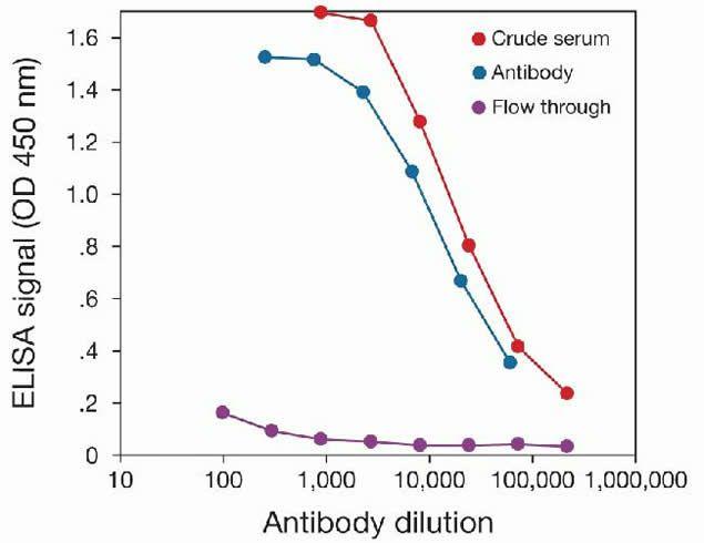 MBD1 Antibody (49-1027) in peptide-ELISA
