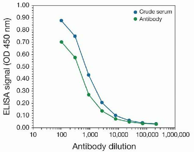 DNMT3B Antibody (49-1028) in peptide-ELISA
