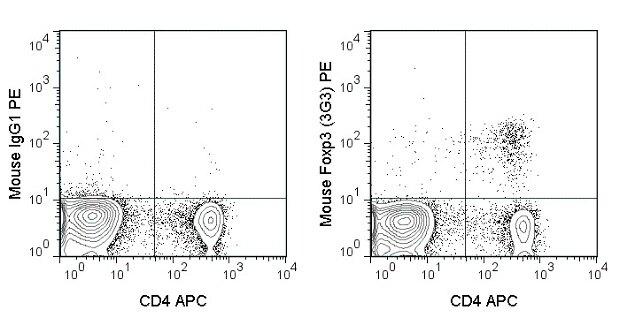 FOXP3 Antibody (A27092)