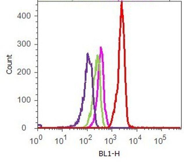 Phospho-FAK (Tyr576) Antibody (700013) in Flow Cytometry