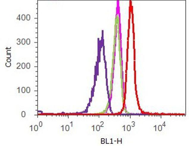FAK2 Antibody (700183) in Flow Cytometry