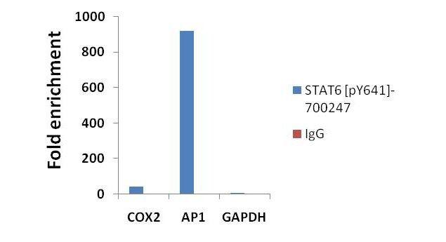 Phospho-STAT6 (Tyr641) Antibody (700247) in ChIP assay