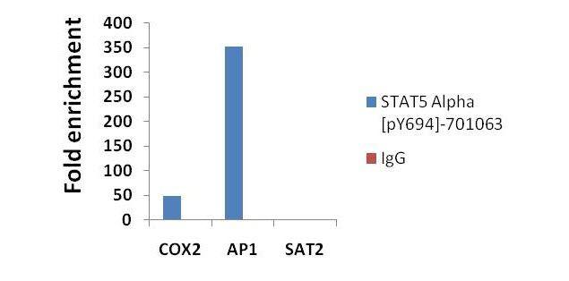 Phospho-STAT5 alpha (Tyr694) Antibody (701063) in ChIP assay