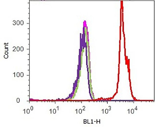 CREB Antibody (701120) in Flow Cytometry