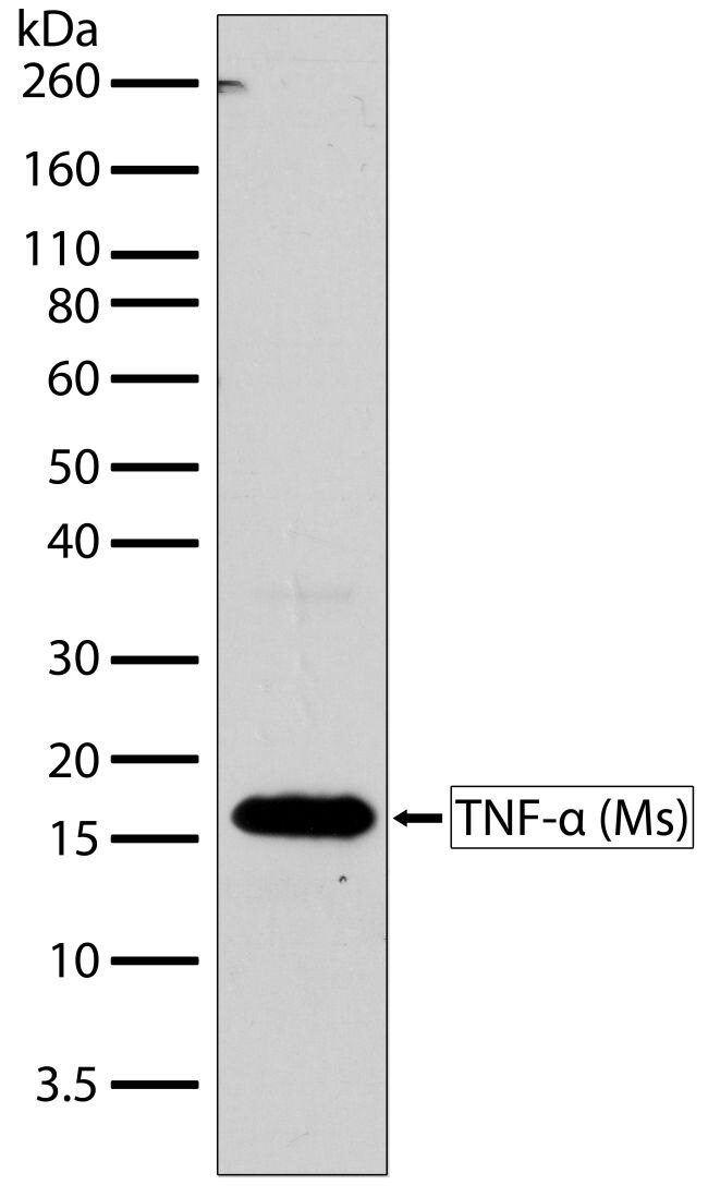 TNF-alpha Antibody (701135)