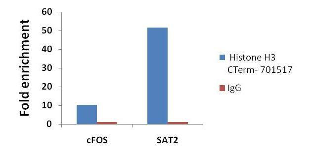 Histone H3 Antibody (701517) in ChIP assay