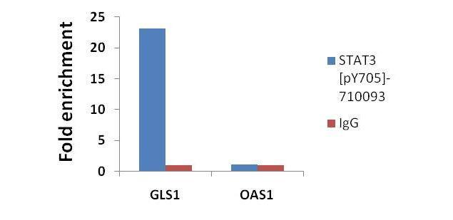 Phospho-STAT3 (Tyr705) Antibody (710093) in ChIP assay