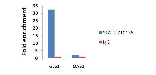 STAT2 Antibody (710135) in ChIP assay