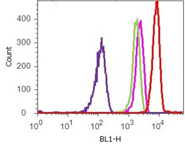 STAT5 beta Antibody (710139) in Flow Cytometry
