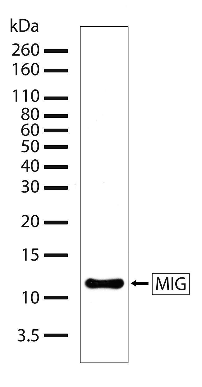 CXCL9 Antibody (710147)
