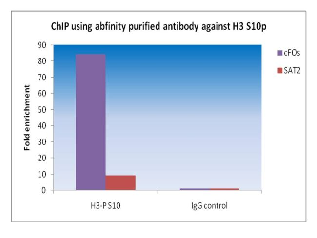 Phospho-Histone H3 (Ser10) Antibody (710282) in ChIP assay
