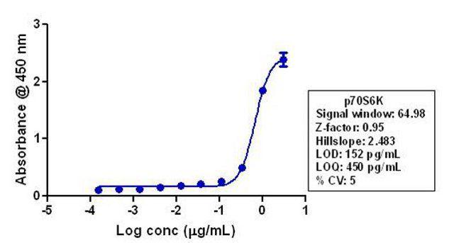 p70 S6 Kinase Antibody (710285) in ELISA