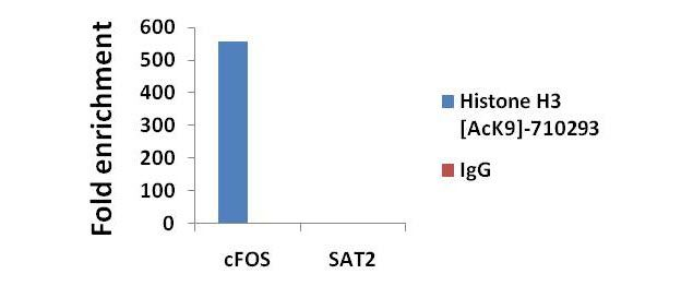 Acetyl-Histone H3 (Lys9) Antibody (710293) in ChIP assay