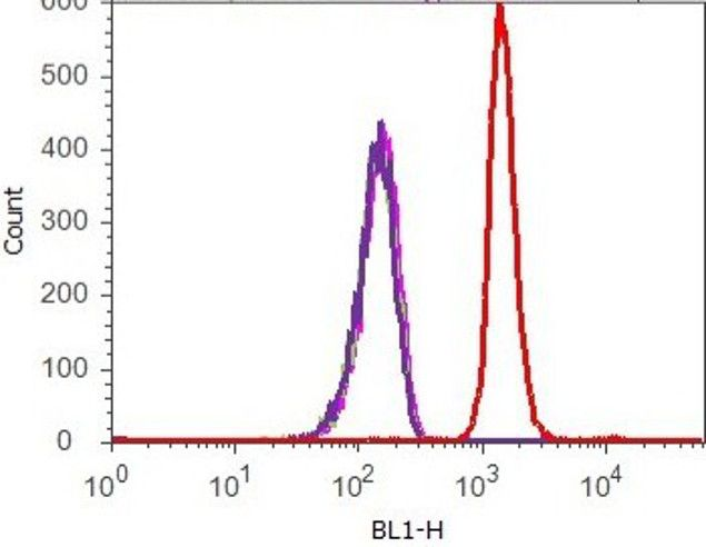 Phospho-Tau (Thr181) Antibody (710561) in Flow Cytometry