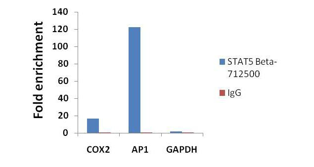 STAT5 beta Antibody (71-2500) in ChIP assay